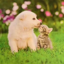 Welpe und Kätzchen (12 cm x 12 cm)